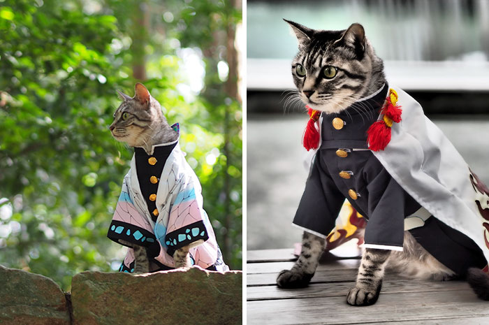 On His Free Time, This Guy Makes Anime Costumes For His Cats And Here Are 35 Of The Coolest Ones