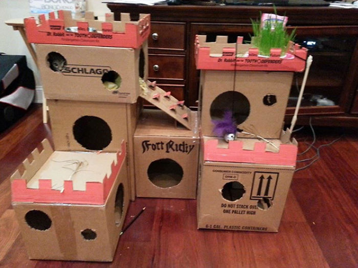 Cats-Cardboard-Forts