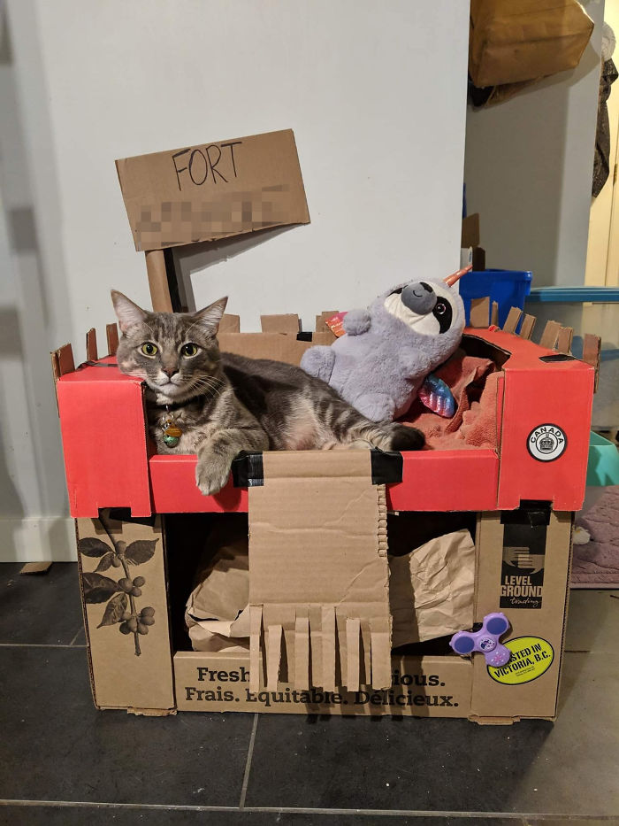 Some Cats Have A Box. Ours Has A Fort And A Slothicorn Guard.