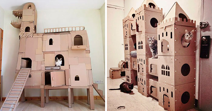 30 Times People Built Their Cats A Cardboard Fort And It's An Ecological Solution To Where To Put All The Boxes