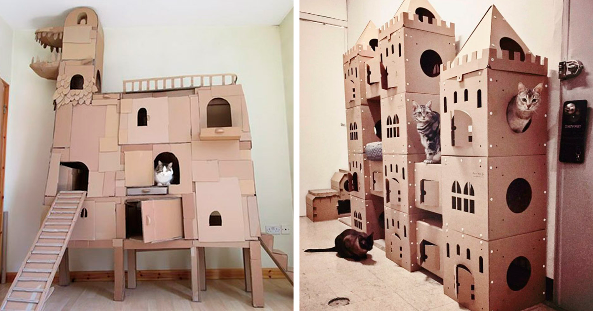 People Are Building Cardboard Forts For Their Cats, And They're Purrfect (85 Pics) - bored panda