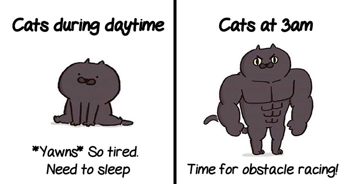 5 Untold Struggles Of Having A Cat