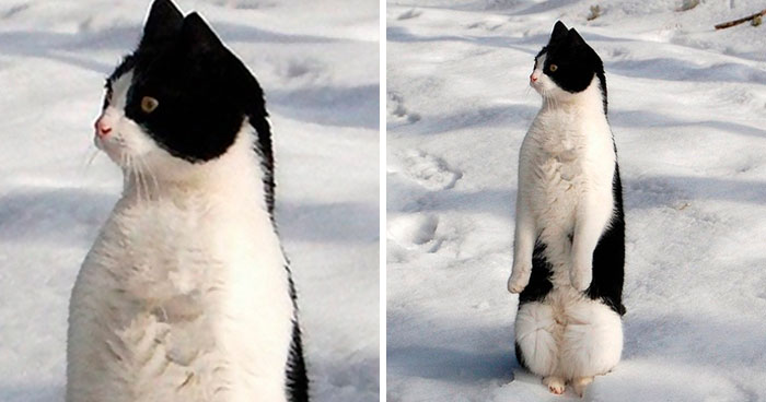 30 Cats Who Decided To Pretend To Be Penguins