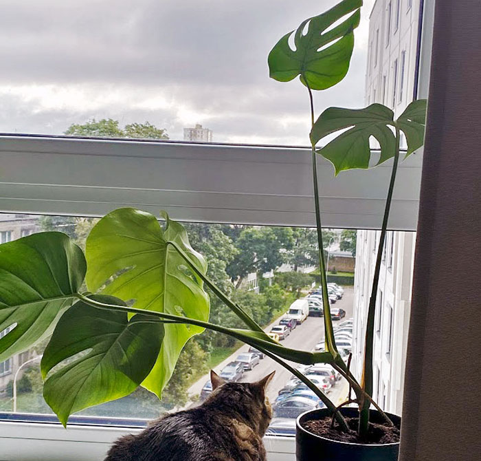 Hey Pandas, Post Your Favorite Houseplants (Ended)