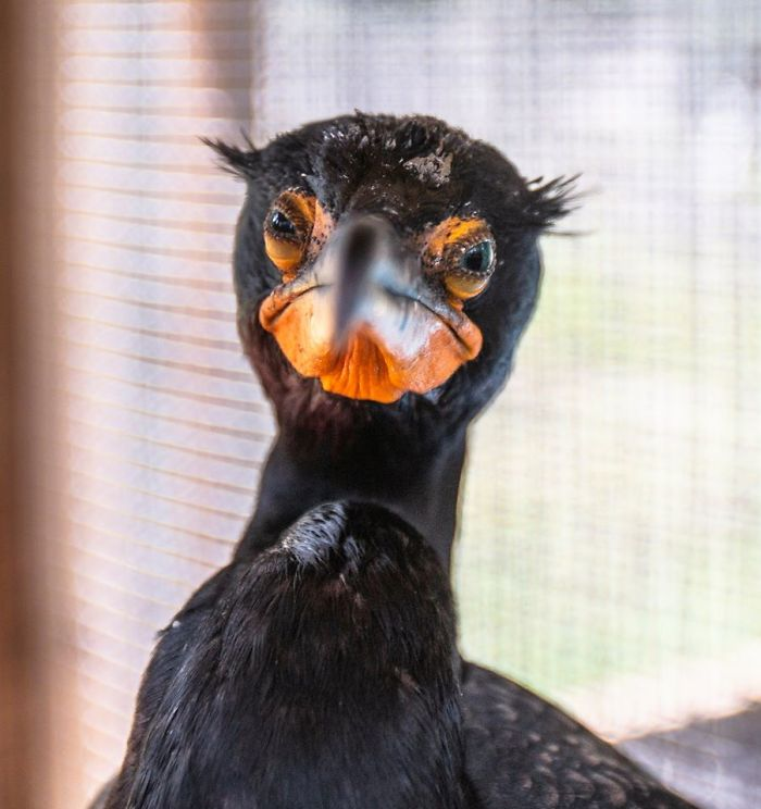 Judgmental Cormorant Knows What You Did