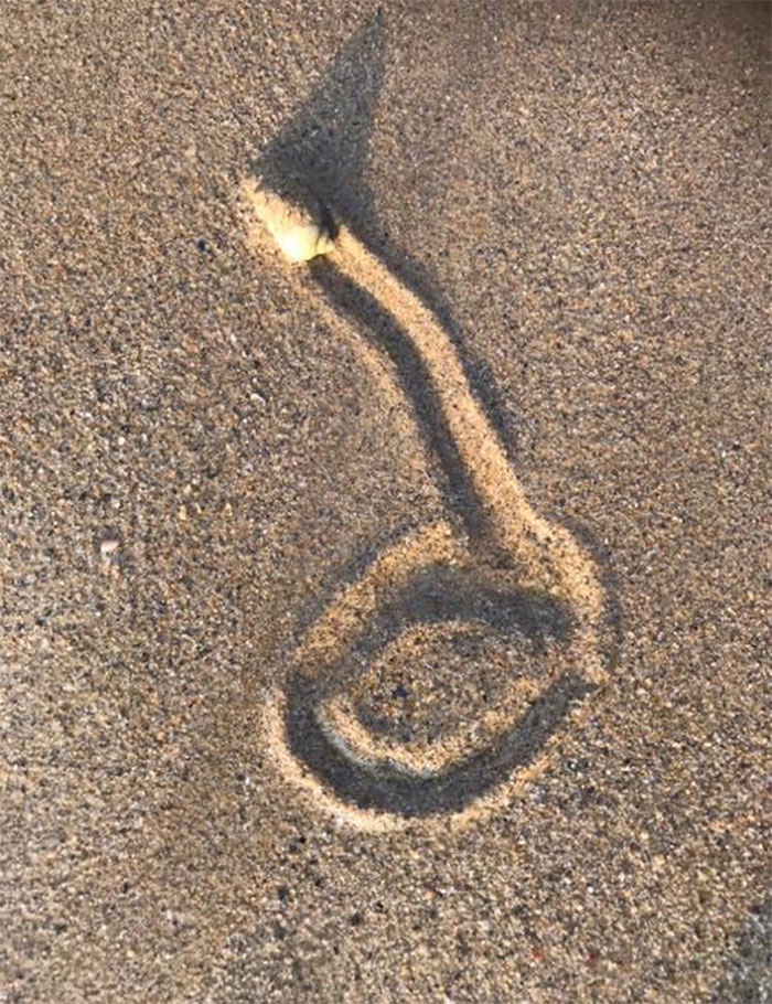 I Don't Know What This Sea Snail Has Started To Draw, But I Think He Should Stop It