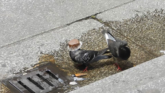 Anyone Know What Kind Of Bird This Is?