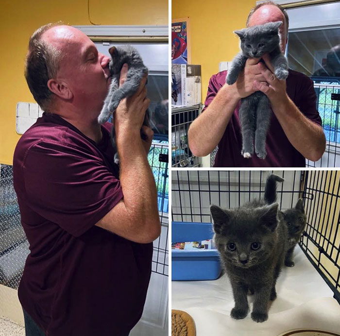Sugar The Kitten Loved Spca Staff Member Glenn So Much And She Would Always Cry For His Attention. So, He Had To Take Her Home!