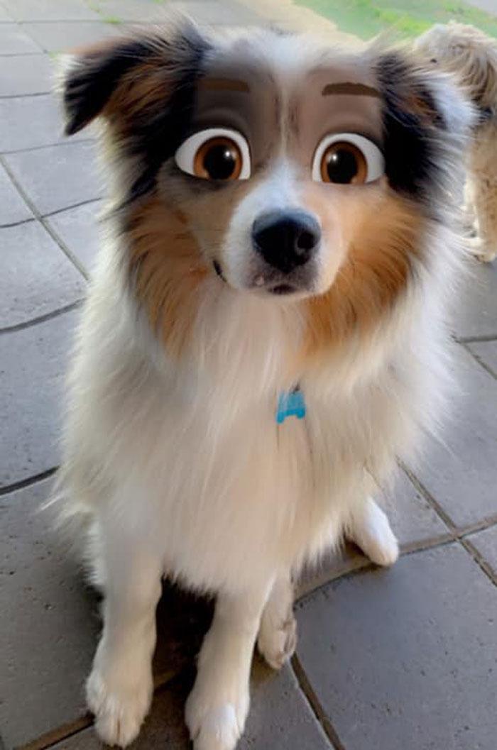 Dog-Disney-Snapchat-Filter