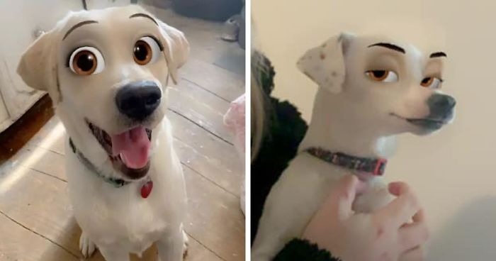This New Snapchat Filter Makes Your Dog Look Like A Disney Character And Here Are 30 Of The Best Results Bored Panda