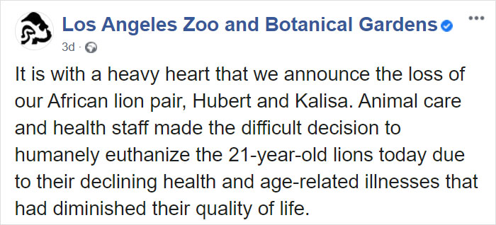 Elderly Lion Couple That Were Soulmates Are Put To Sleep At The Same Time So Neither Has To Live Alone