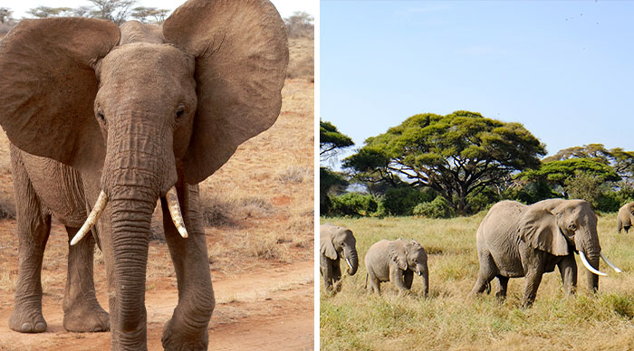 Apparently, Kenya's Elephant Population Has More Than Doubled Over Last Three Decades