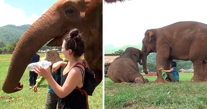 Elephant Pushes Visitors Away So Her Caretaker Can Sing A Lullaby To Her Baby