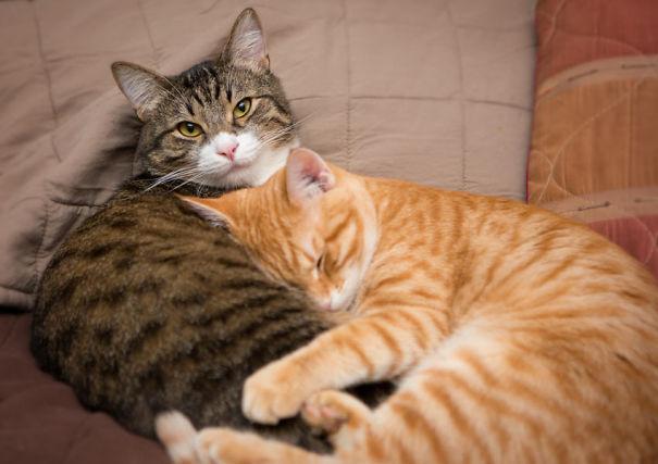 entangled_cats-5f35695a58c22.jpg
