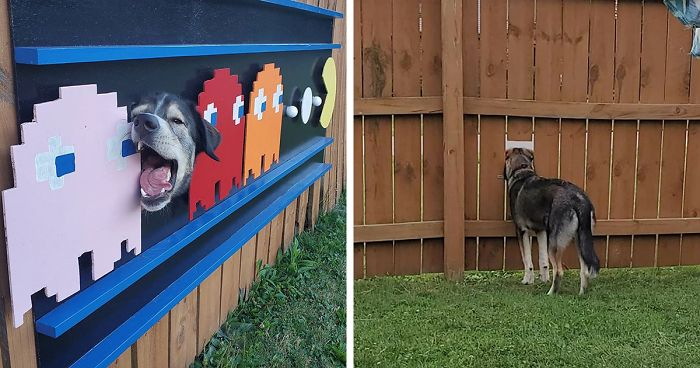 These Dogs Like To Look At Their Neighborhood Through A Hole In A Fence, So Their Owners Put Up Posters To Make Their Neighbors Laugh