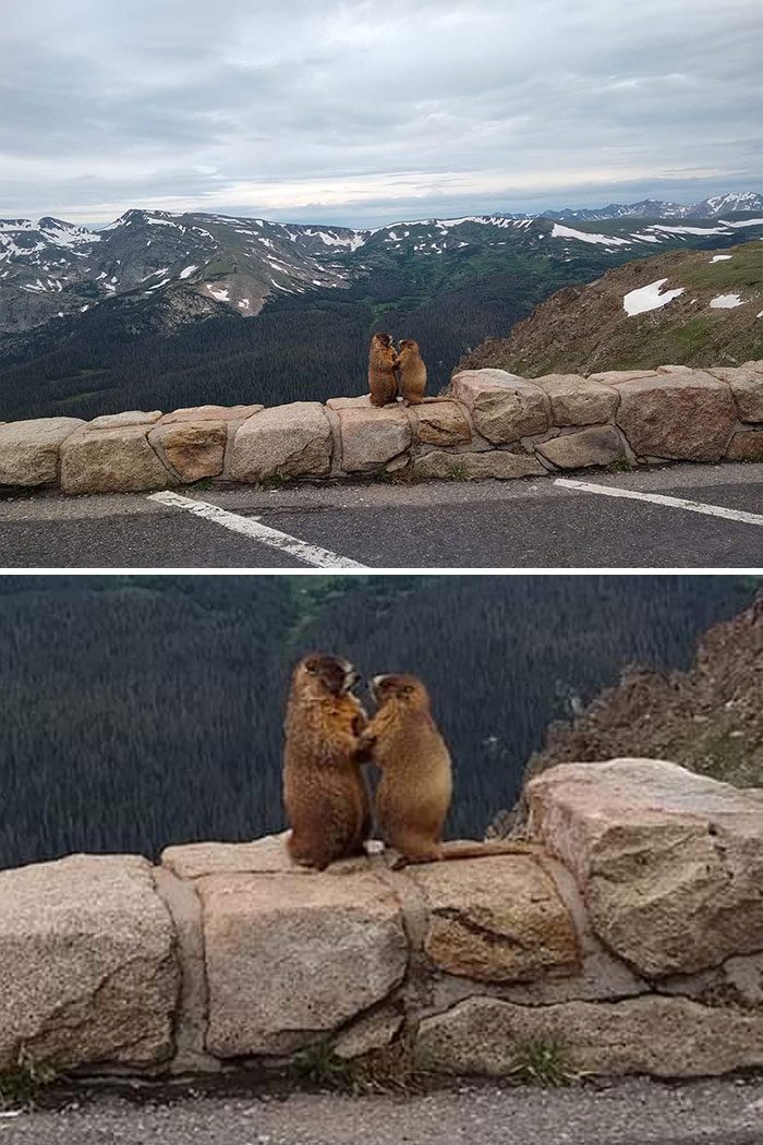 My Sister Accidentally Caught This Pikes Peak Proposal On Camera