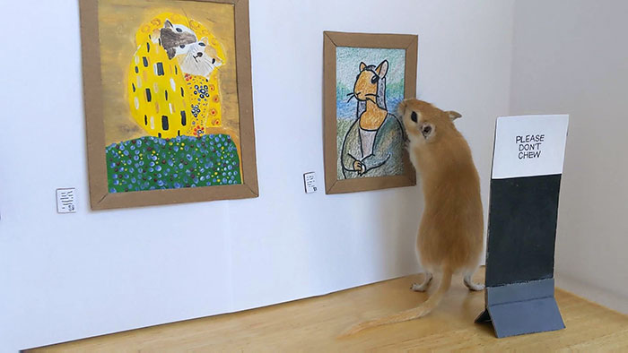 Quarantine, Day 14. Me And My Boyfriend Spent The Whole Day Setting Up An Art Gallery For Our Gerbil