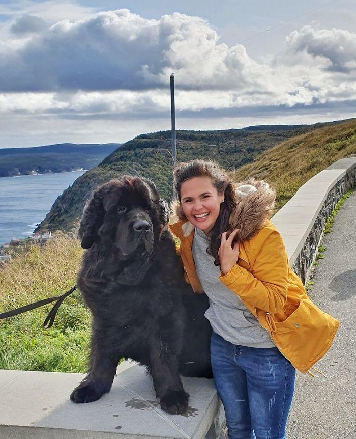 I Found A Newfoundland In Newfoundland!