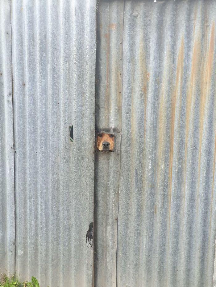 Angry Boi Protecc Yard