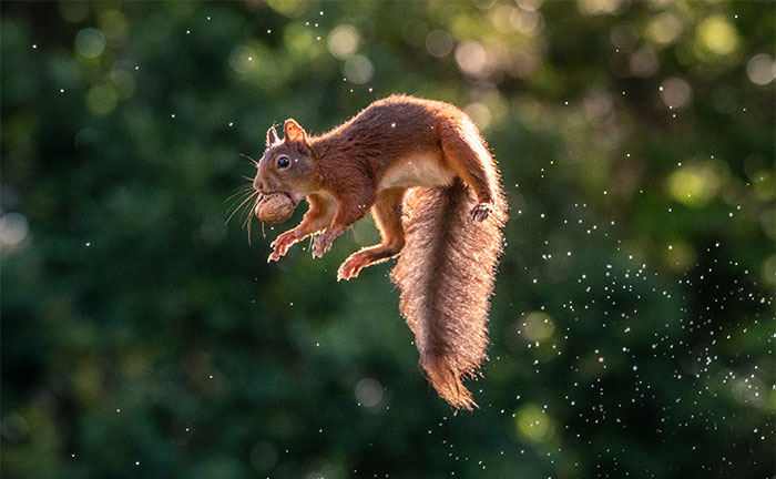 I Found Peace In Photographing Squirrels After I Survived The Rwandan Genocide War