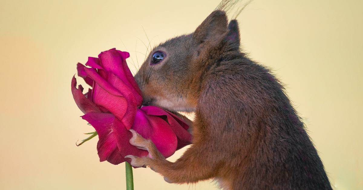 To Spread Some Joy, I Photograph Squirrels Playing In My Garden