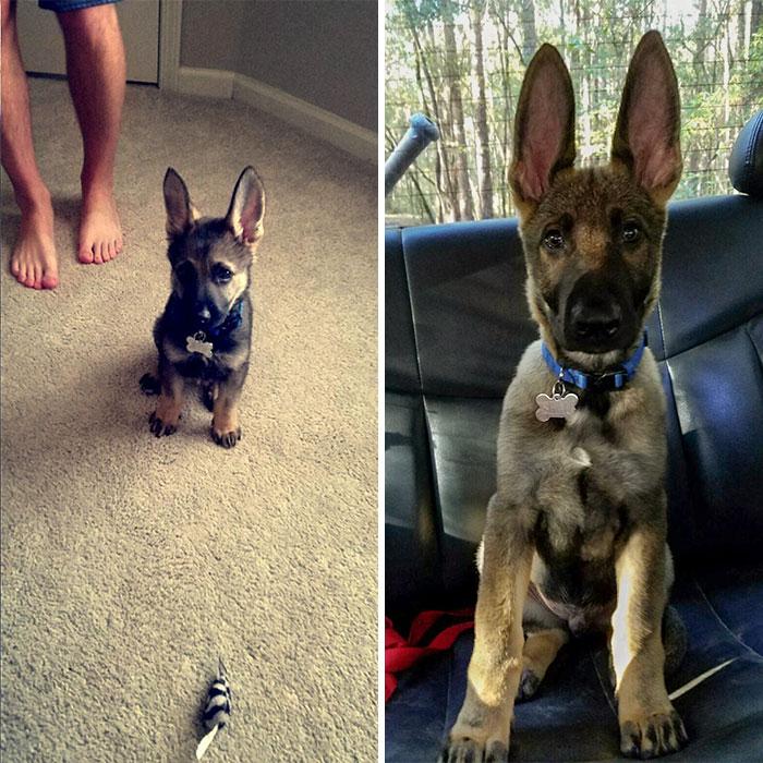 Pensábamos que sus orejas ya habían crecido del todo