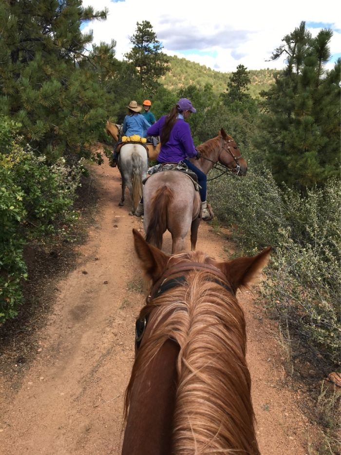 Trail Riding. What Could Be Better Than Experiencing Nature On Horseback?