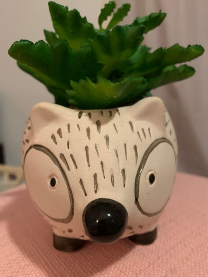 Remember Evan? Well This Is Wilson His Friend But He Is A Fake Plant, We Don't Tell Him This