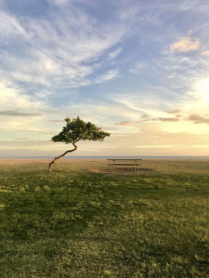 Trees: Third Place, 'Solitude Beauty', Ewa Beach, Hawaii By Chuyang Baideme