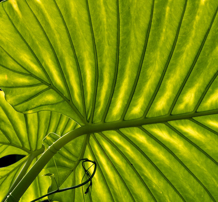 Highly Commended, 'Leaf Structure' By Dinah Jayes
