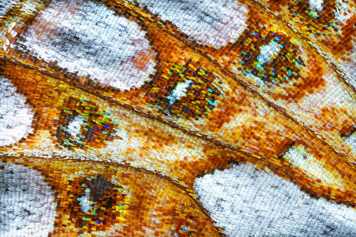 Highly Commended, 'Butterfly Wing V' By Petar Sabol
