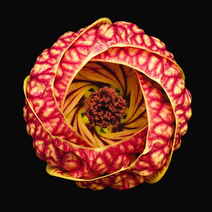 Finalist, 'Vortex Blossom' By Bruno Militelli