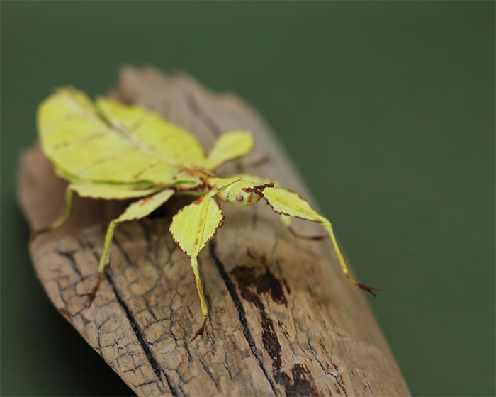I Use My Unique Technique To Create Realistic Animals And Plants From Paper (34 New Pics)