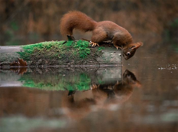I Captured Squirrels Looking In The Water As If They Were Looking In The Mirror (14 Pics)