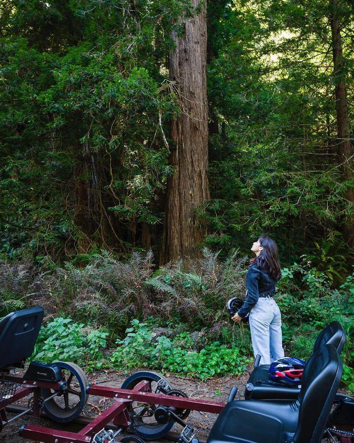 redwood-forest-railbike-skunk-train-10-5f4cb6bdb1bef__700.jpg