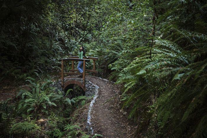 redwood-forest-railbike-skunk-train-19-5f4cb6cddcb99__700.jpg