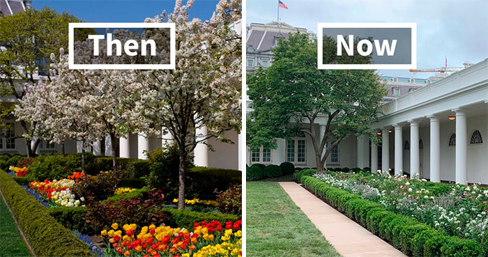 People Are Ridiculing Melania Trump's White House Rose Garden Renovation With Savage Tweets
