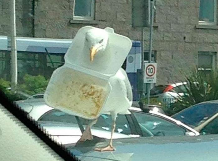 Seagull Gets Head Stuck In Takeaway Box