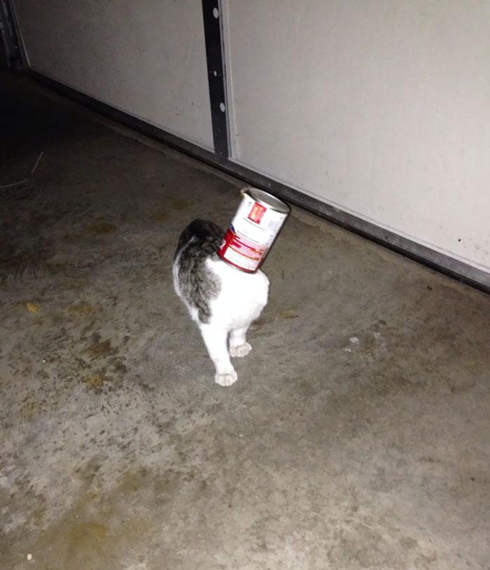 My Idiot Cat Got Her Head Stuck In A Can