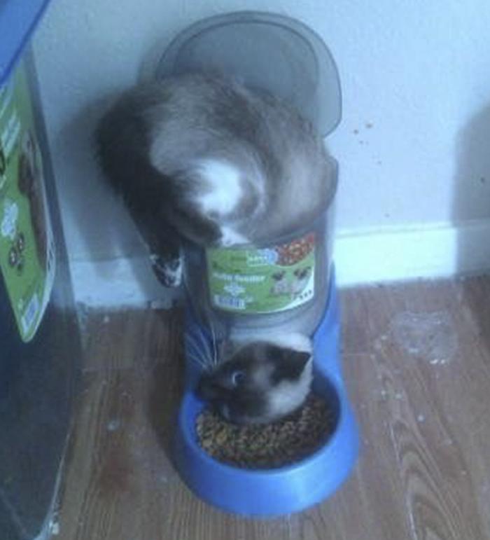 I'm Stuck!!! Cat Faces Dry Food Feeder Dilemma