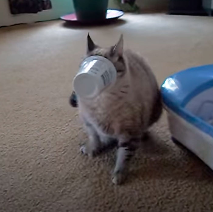 Cats Face Stuck In Yogurt Cup