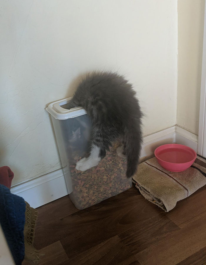 Kitten Decided I Wasn't Feeding Him Enough And Went Ahead And Got Stuck