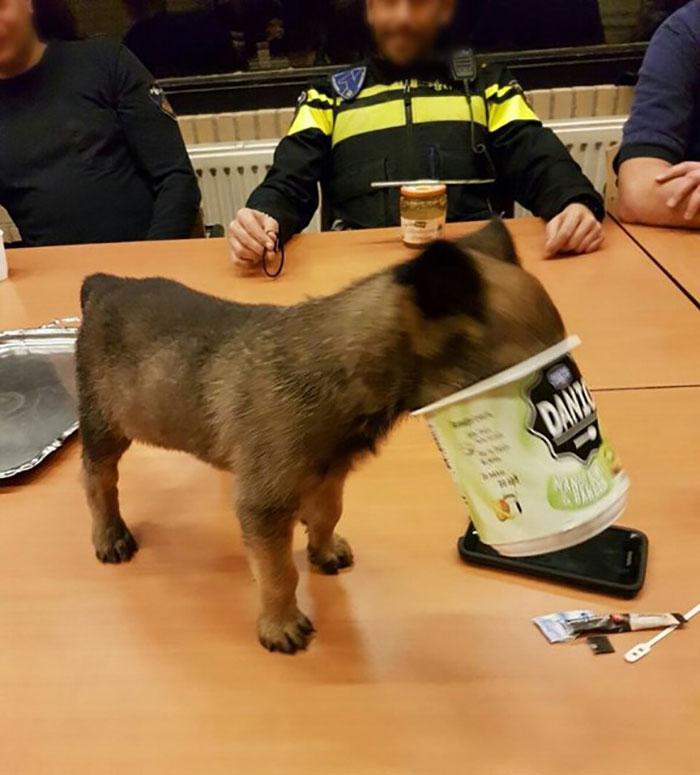 Dutch Police Dog Gets Stuck In A Yoghurt Pot