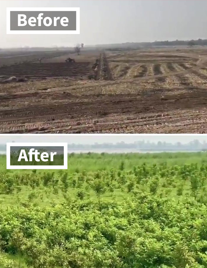 """See How The """"10 Billion Tree Tsunami"""" Tree Planting Campaign Transformed This Area Between 2019 And 2020"""