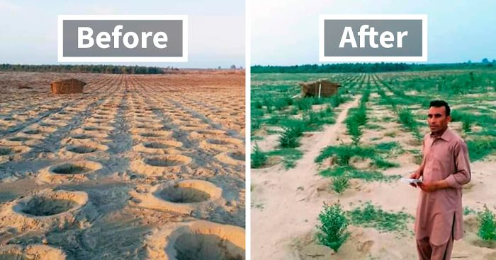 See How One Of Pakistan's Famous 10 Billion Tree Tsunami Project Plantations Looks A Year Later