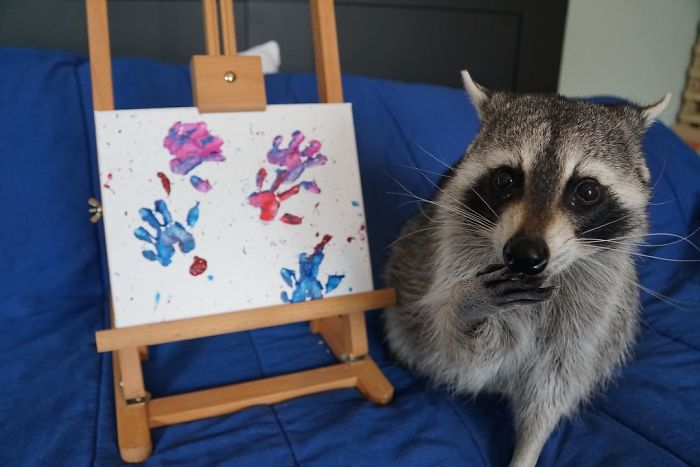 Proud Raccoon Artists Are Posing Next To Their Paintings And They Look So Happy