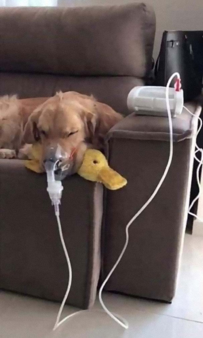 Doggy Has Asthma And Requires Multiple Nebulizations. But As Long As He Has His Ducky With Him, He Know He Is Gonna Be Ok