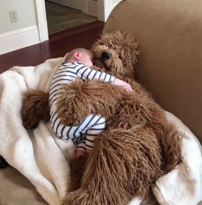 If You've Had A Rough Week Check Out Little Man Snoozing With His Very Good Boy
