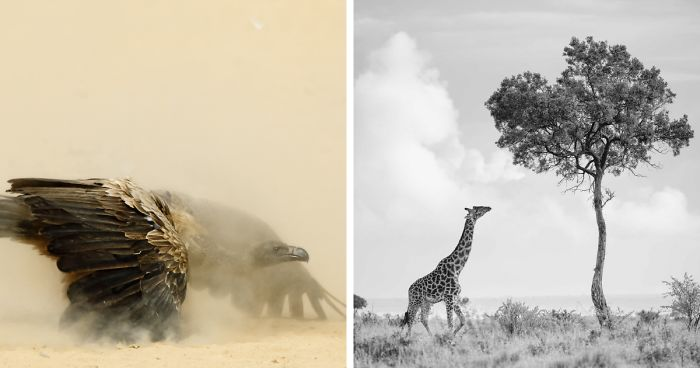 After Working In Finance For 15 Years, I Quit To Photograph Wildlife. Here Are My 38 Favorite Photos From Africa