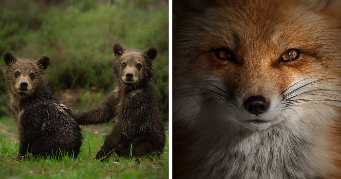 I Gave Up Normal Life For Wildlife Photography Here Are 40 Of My Photos Bored Panda
